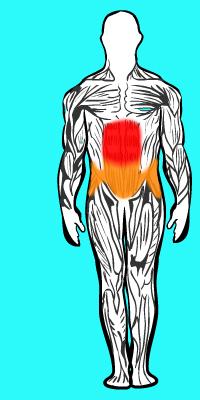 Muscle solliciter Abdominaux grand droit supérieur